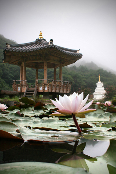 Korea Zen Monastery Temple Daewonsa Lotus Flower